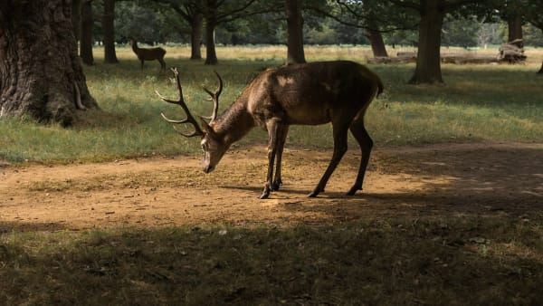 Richmond Park Outings